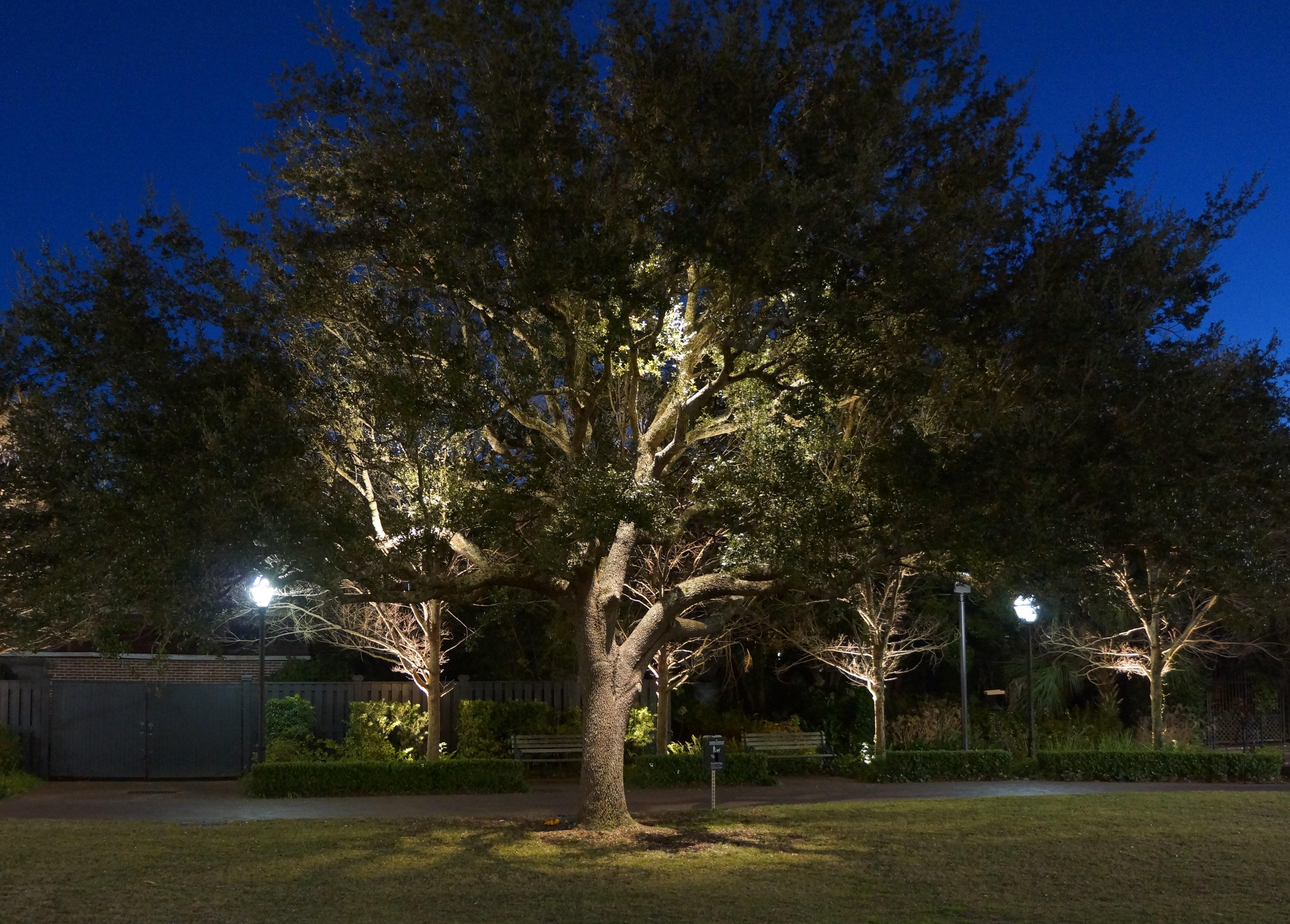 How Do You Light A Tree